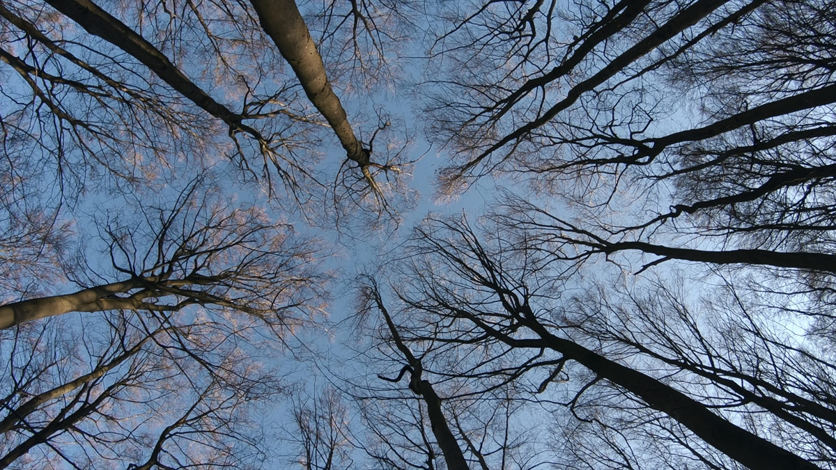 Still from The Hidden Life of Trees