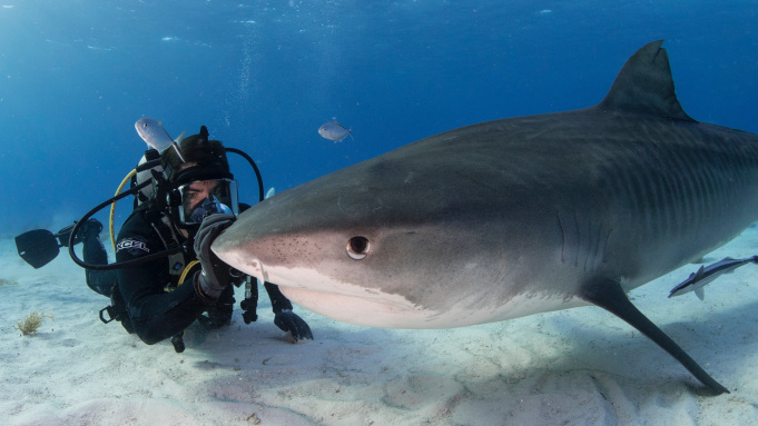 Eli Roth petting a shark in Fin