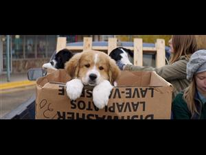 a-dogs-purpose-official-trailer Video Thumbnail