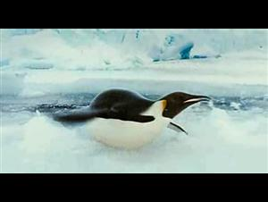 march-of-the-penguins Video Thumbnail