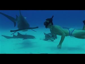 Sharkwater: Extinction - Live Stream Announcement Trailer Video Thumbnail
