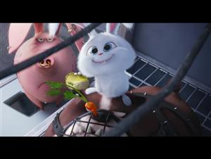 "The Secret Life of Pets movie clip - ""We Are The Flushed Pets"" Video Thumbnail"
