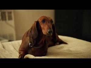 Wiener-Dog - Official Trailer Video Thumbnail