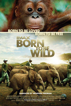 Born To Be Wild Large Poster