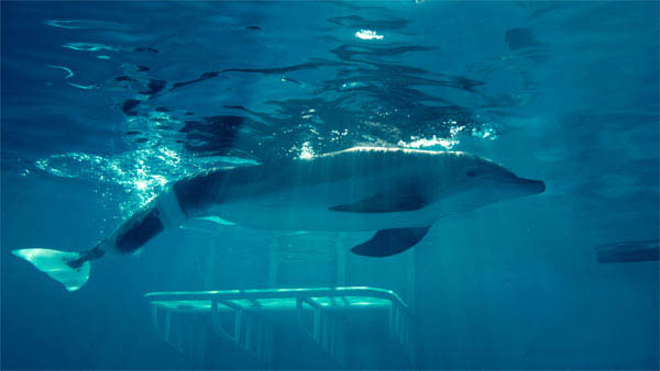 Dolphin Tale Photo 6 - Large