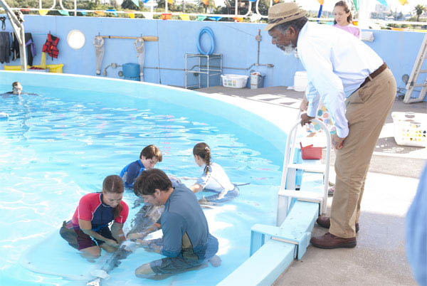 Dolphin Tale Photo 31 - Large