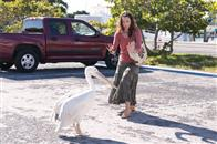 Dolphin Tale Photo 22