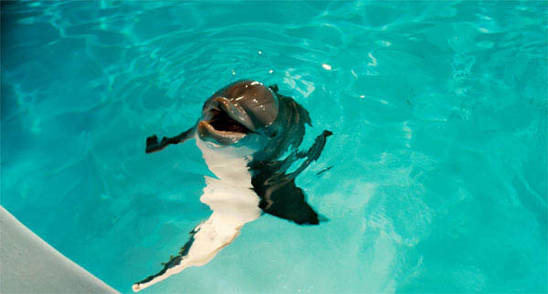 Dolphin Tale Photo 2 - Large