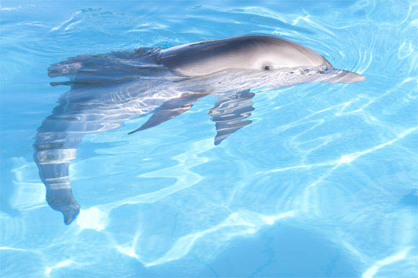 Dolphin Tale Photo 13 - Large