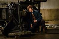 Fantastic Beasts and Where to Find Them Photo 37