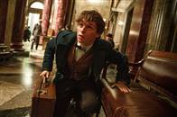 Fantastic Beasts and Where to Find Them Photo 33