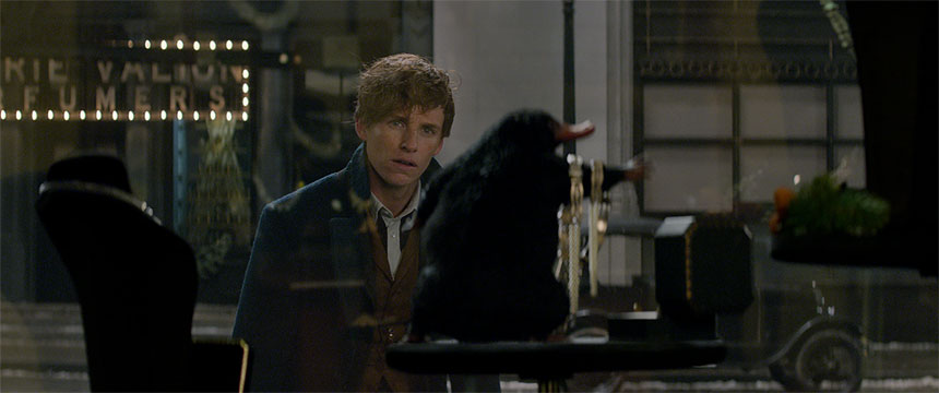 Fantastic Beasts and Where to Find Them Photo 12 - Large
