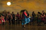 Flamenco, Flamenco Photo 4